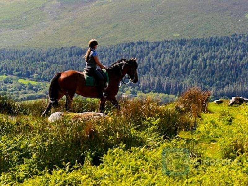 Horse-Riding-4